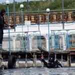 Військові водолази візьмуться за розмінування водойм – People's Project