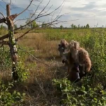 Як працюють українські розвідники - вітальне відео
