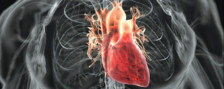 The researchers grown the outer layer of the heart