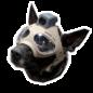 Шолом для пса K9 Trident M1
